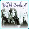 wildorchidcover